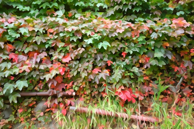 Autumn mood in Japan