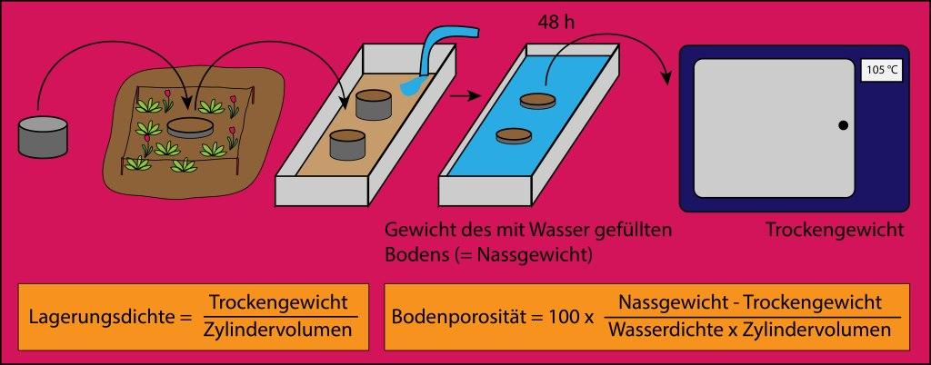 Methode zur Bestimmung von Lagerungsdichte und Bodenporosität