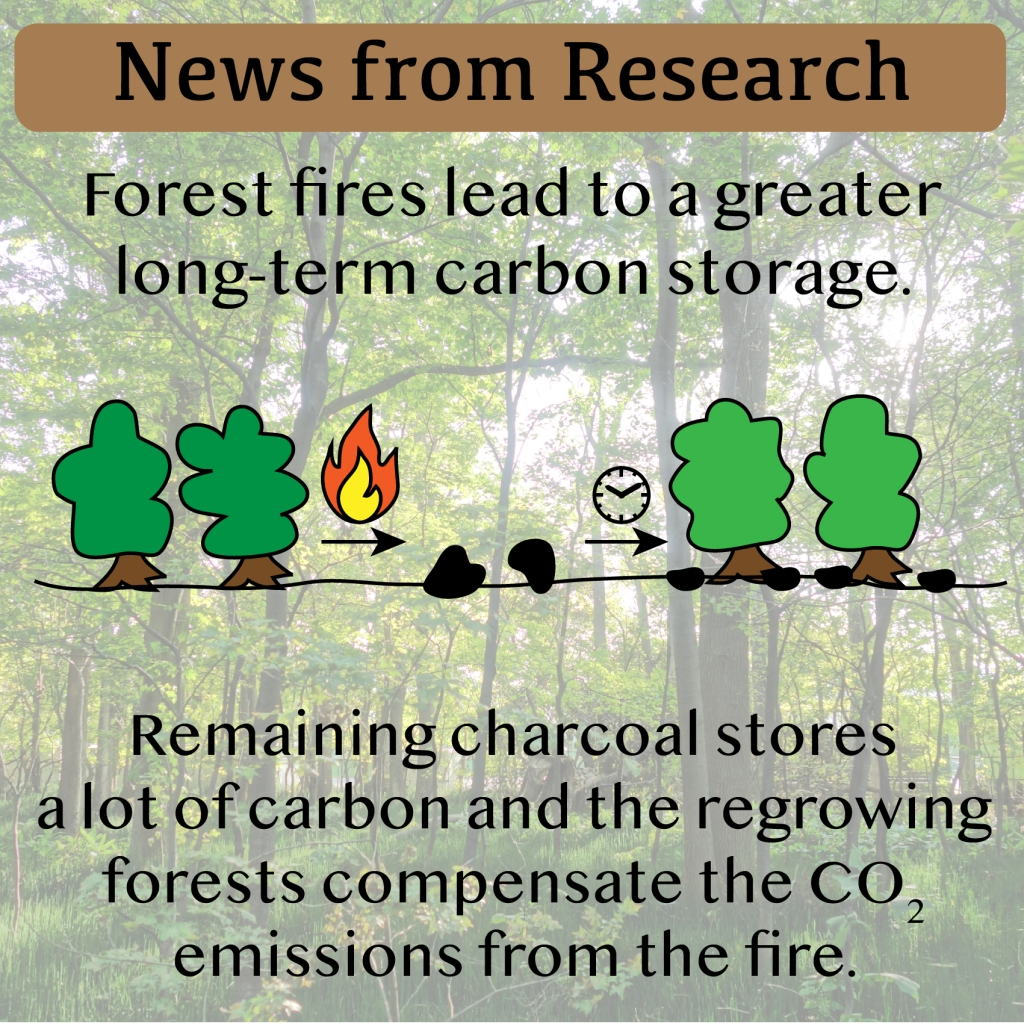 News from Research - Forest Fires