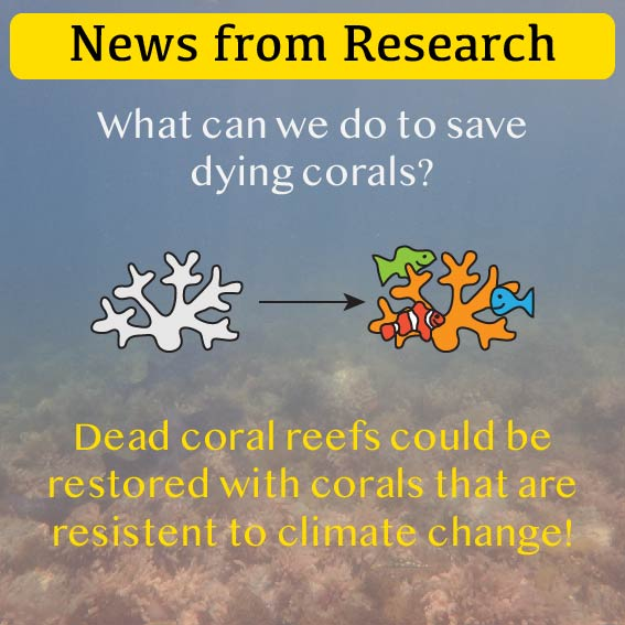 News from Research - Climate change resistant corals